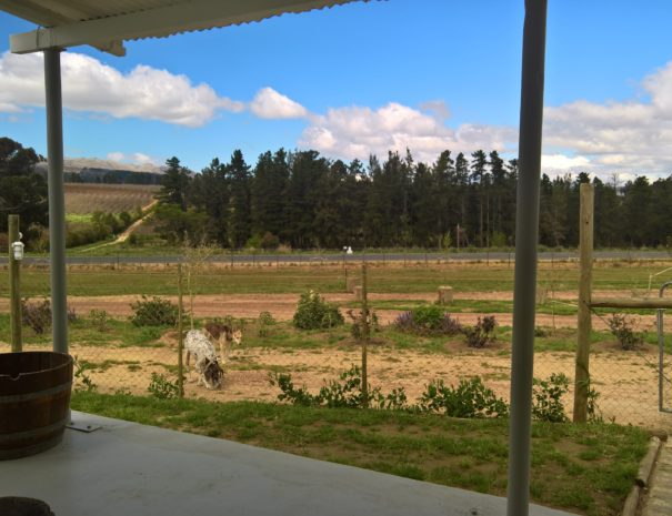View to the east from the Fig Cottage patio