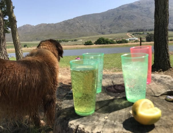 Drinks and Dogs at Pear Dam